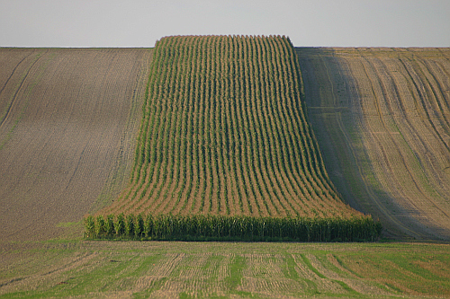 Photo of corn field France